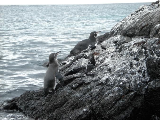Oh my god! Penguins!