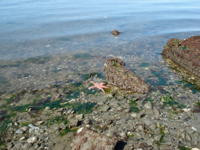 ArbutusStarfish