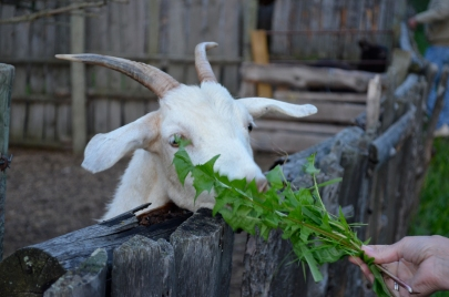 I can't find any images of children at play...so here is a picture of a goat.